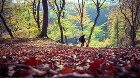 Autumn forest. Autumn in Germany. royalty free stock image