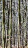 Autumn Forest avec l'élevage d'arbres Image libre de droits