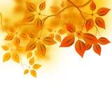 Autumn Forest Background Stock Photos