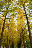 Autumn forest background. Stock Photo