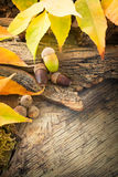 Autumn forest background Royalty Free Stock Photo