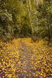 Autumn forest background Royalty Free Stock Photos