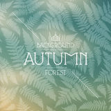 Autumn forest background. Autumn forest blurred background. Seamless pattern with a picture of a fern Stock Photography