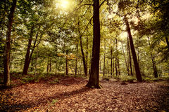 Autumn forest background Royalty Free Stock Images