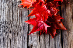 Autumn forest background. Fall on leaves on weathered table Stock Photography