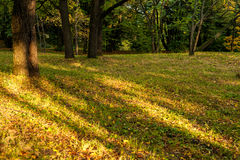 Autumn forest background Stock Photography