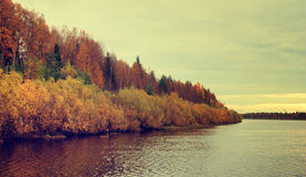 Autumn forest on the bank of the river. Stock Photos