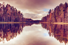 Autumn forest on the bank of the river. Royalty Free Stock Images