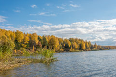 Autumn forest on the banks of the river. Autumn forest dressed in the bright colors of autumn beautifully looks at the background of the river and the beautiful royalty free stock images