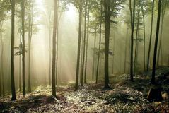 autumn forest, beams of light through the trees Stock Photos