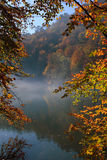 Autumn in forest. Beautibul scene in autumn forest Royalty Free Stock Photos