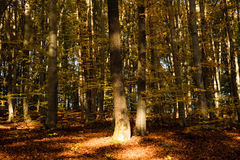 Autumn forest. In a beautiful autumn afternoon Royalty Free Stock Photography