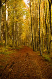 Autumn forest. In a beautiful autumn afternoon Stock Photo