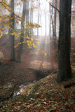 Autumn in the forest Royalty Free Stock Images