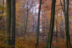 Autumn in the forest Royalty Free Stock Photos