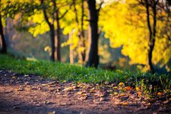 Autumn Forest in beautiful colors. Autumn Leaves Woods near the autumn road Stock Photography