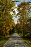Autumn. Forest in the autumn with beautiful colors Stock Photography