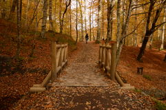 Autumn. Forest in the autumn with beautiful colors Stock Photo