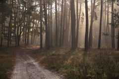 Autumn in the forest. beautiful green forest and road. Beautiful morning scene in the forest with sun rays and long shadows stock photos