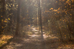 Autumn forest. Beautiful landscape - autumn forest and forest path Stock Photos