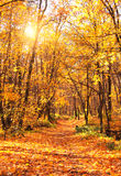 Autumn forest Royalty Free Stock Photo