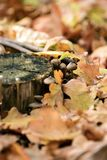 Autumn forest. beautiful mushrooms. Beautiful mushrooms on a background of yellow autumn leaves Royalty Free Stock Image