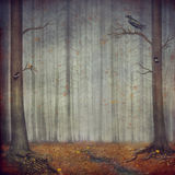 Autumn forest . The beautiful nature background Stock Photo