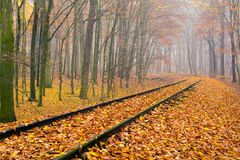 Autumn forest Royalty Free Stock Images