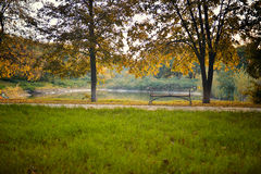 Autumn in forest Stock Photography