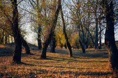 Free Autumn Forest - Beautiful Wild Landscape, Bright Sunlight And Shadows At Sunset, Golden Fallen Leaves And Branches, Nature And Stock Photo - 155940260