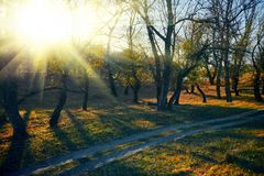 Free Autumn Forest - Beautiful Wild Landscape, Bright Sunlight And Shadows At Sunset, Golden Fallen Leaves And Branches, Nature And Stock Photography - 156130952