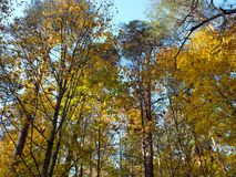 Autumn forest. Beautuful autumn forest and colored trees stock photo