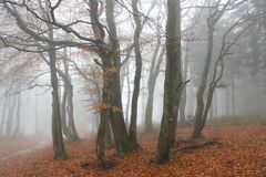 Autumn Forest in Beskidy Mountains Royalty Free Stock Photo