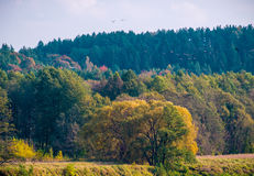 Autumn forest and birds leaving Stock Image