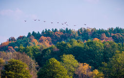 Autumn forest and birds leaving Stock Photography