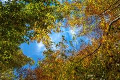Autumn Forest Blue Sky Royaltyfria Bilder