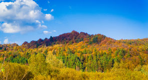 Autumn forest and blue sky. With clouds Royalty Free Stock Images