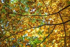 Autumn Forest Blue Sky med filialer Fotografering för Bildbyråer
