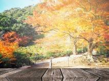 Autumn forest blur background Stock Photos