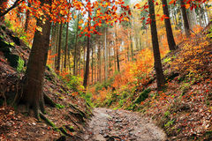 Autumn Forest in Bohemian Paradise Stock Photography