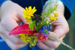 Autumn forest bouquet in child hand. Colorful autumn bouquet of forest flowers and blueberry in child hand, shallow DoF stock image