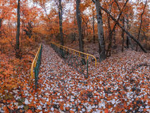 Autumn forest. Bridge across the brook dried up, in autumn forest stock image