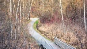 Autumn forest bridge pathway Stock Image