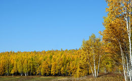 Autumn at forest . stock photography