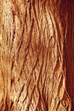 Autumn forest brown wooden background. Texture forest wooden tre Royalty Free Stock Photography