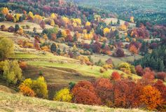 Autumn forest in Bulgaria royalty free stock photography