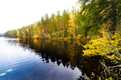 Autumn forest and a calm lake. Autumn forest and a calm dark lake stock images