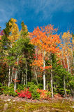 Autumn Forest in Canada. Massif Ski Resort near Quebec city, Canada in October Stock Photos