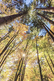 Autumn forest canopee Royalty Free Stock Photos