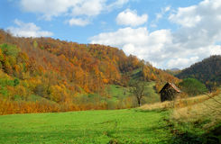 Autumn forest in the Carpathian Mountains, Romania Royalty Free Stock Image